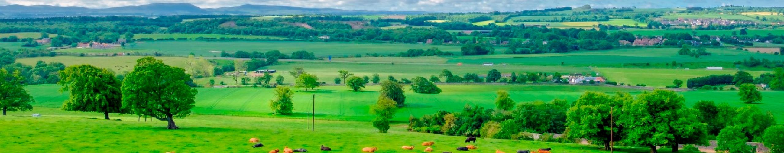 WL Landscape
